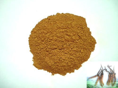 Đông trùng hạ thảo sợi nấm Cs-4